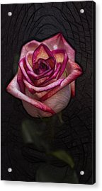 Picturesque Satin Rose Acrylic Print by Linda Tiepelman