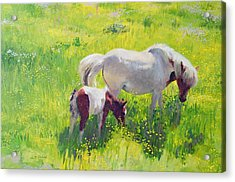 Piebald Horse And Foal Acrylic Print by William Ireland
