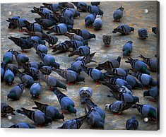 Pigeons Acrylic Print by Johnson Moya