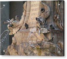 Pigeons Playtime Acrylic Print by Valia Bradshaw