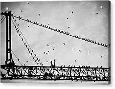 Pigeons Sitting On Building Crane And Flying Acrylic Print by Image by Ivo Berg (Crazy-Ivory)