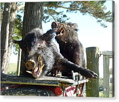 Piggy Back Smiley Hitch Hikers Acrylic Print by Dianne  Connolly