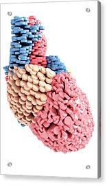 Pills Heart Acrylic Print by MedicalRF.com