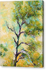 Pine Abstract Acrylic Print by Marion Rose