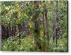 Pine Barrens Acrylic Print