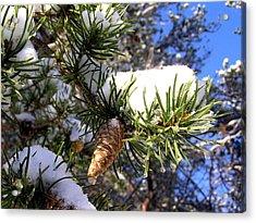 Pine Cone In Winter Acrylic Print