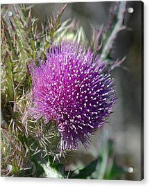 Acrylic Print featuring the photograph Pine Flower by Jeanne Andrews