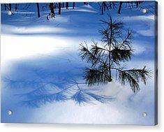 Pine Shadow Acrylic Print