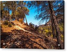 Pine Trees In El Chorro. Spain Acrylic Print by Jenny Rainbow