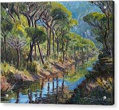 Pine Wood Reflections Acrylic Print by Marco Busoni