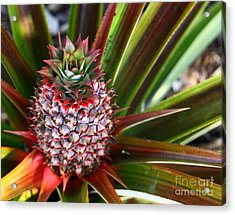 Acrylic Print featuring the photograph Pineapple by Denise Pohl
