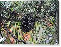 Acrylic Print featuring the photograph Pinecone by Donna  Smith