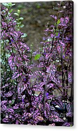 Pink And Green Leaves Acrylic Print by Eva Thomas