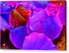 Pink And Purple Leaves Acrylic Print by Sheila Kay McIntyre