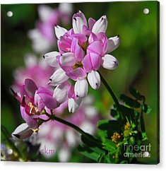 Acrylic Print featuring the photograph Pink And White by Cindy Manero