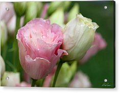 Pink And White Lisianthus Acrylic Print