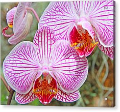 Pink And White Orchids Acrylic Print by Becky Lodes
