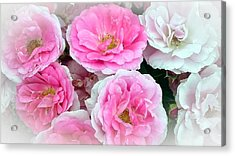 Pink And White Rose Melody Acrylic Print by Chantal PhotoPix