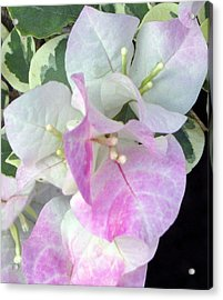 Acrylic Print featuring the photograph Pink And White Surprise by Debi Singer