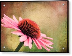 Pink Beauty Acrylic Print by Darren Fisher