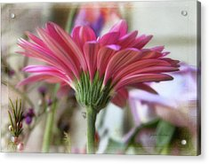Acrylic Print featuring the photograph Pink Beauty by Joan Bertucci