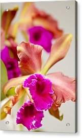 Pink Cattalaya Orchid Acrylic Print by Ron Dahlquist
