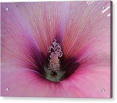Pink Celebration Acrylic Print by Beth Akerman