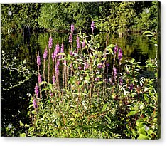 Pink Acrylic Print by Dennis Leatherman