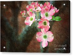 Pink Dogwood Cascade Acrylic Print by Andee Design