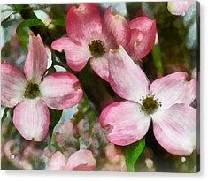 Pink Dogwood Closeup Acrylic Print by Susan Savad