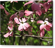 Acrylic Print featuring the photograph Pink Dogwood Tree by Rebecca Overton