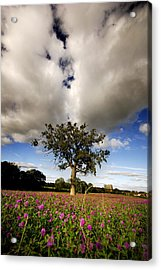 Acrylic Print featuring the photograph Pink Drops by John Chivers