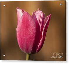 Acrylic Print featuring the photograph Pink by Eunice Gibb