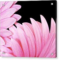 Pink Fan Acrylic Print