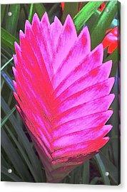 Pink Fan Acrylic Print by Paul Washington