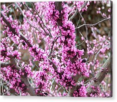 Acrylic Print featuring the photograph Pink Flower by Andrea Anderegg