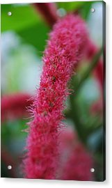 Pink Flower Acrylic Print by Carrie Munoz