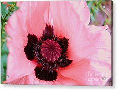 Acrylic Print featuring the photograph Pink Flower by Jasna Gopic