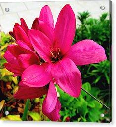 Pink Flower Acrylic Print by Joyce Woodhouse
