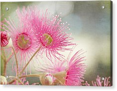 Pink Flowering Acrylic Print