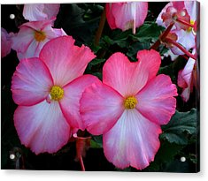 Pink Flowers Acrylic Print by Kathy Long