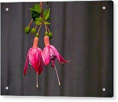Pink Fuchsia Acrylic Print