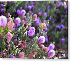Acrylic Print featuring the photograph Pink Fuzzy Balls by Clayton Bruster