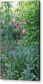 Pink Garden Flowers Acrylic Print by Thelma Harcum