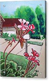 Pink Geranium Sketchbook Project Down My Street Acrylic Print by Irina Sztukowski