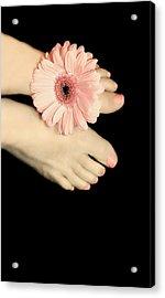 Pink Gerbera Daisy Acrylic Print by Diana Lee Angstadt
