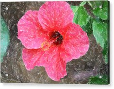 Acrylic Print featuring the photograph Pink Hibiscus by Donna  Smith