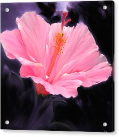 Pink Hibiscus Acrylic Print by Marcos Porcayo