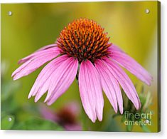 Pink Is In Acrylic Print by Sabrina L Ryan