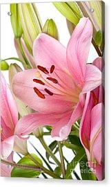 Pink Lilies 05 Acrylic Print by Nailia Schwarz